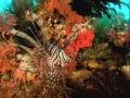 Красоты подводного мира Красного моря