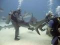 Отдых для авантюристов – дайвинг с акулами