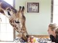 В гости к жирафам