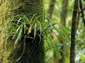 ТОП – 5: самый красивый лес